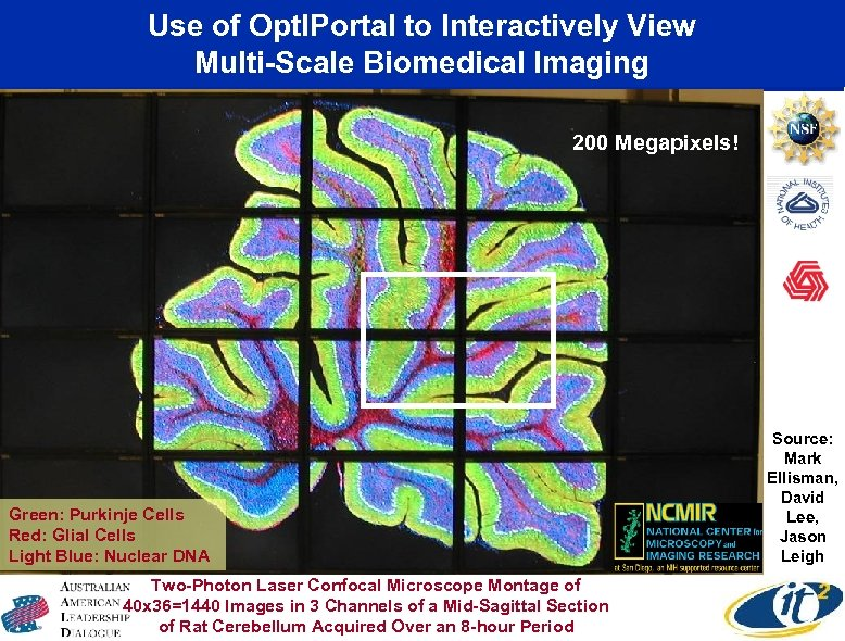 Use of Opt. IPortal to Interactively View Multi-Scale Biomedical Imaging 200 Megapixels! Green: Purkinje