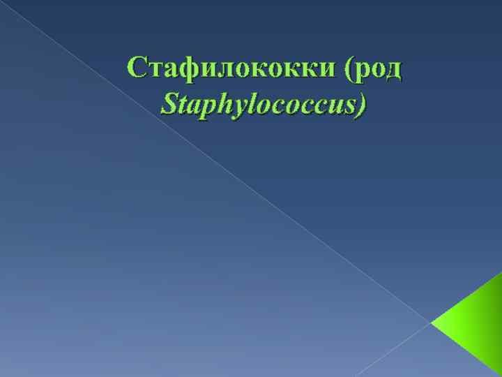 Стафилококки (род Staphylococcus)