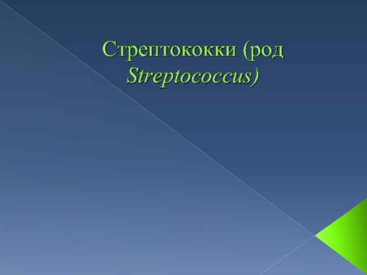 Стрептококки (род Streptococcus)
