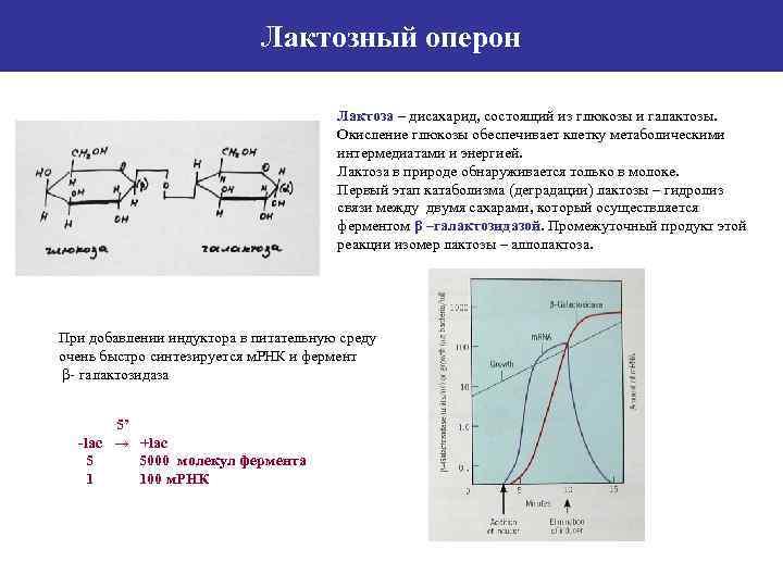 Лактозный оперон Лактоза – дисахарид, состоящий из глюкозы и галактозы. Окисление глюкозы обеспечивает клетку
