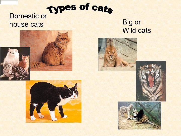 Domestic or house cats Big or Wild cats