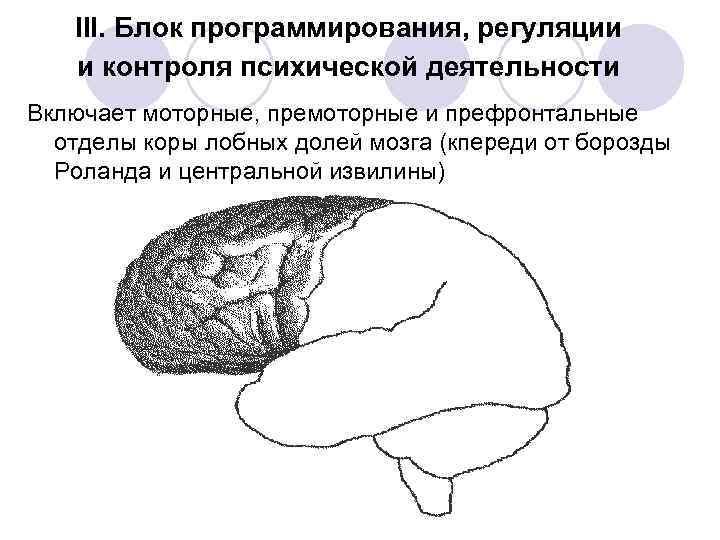 три блока мозга картинка ноге усиливает жажду