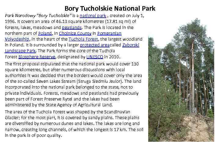 Bory Tucholskie National Park Narodowy