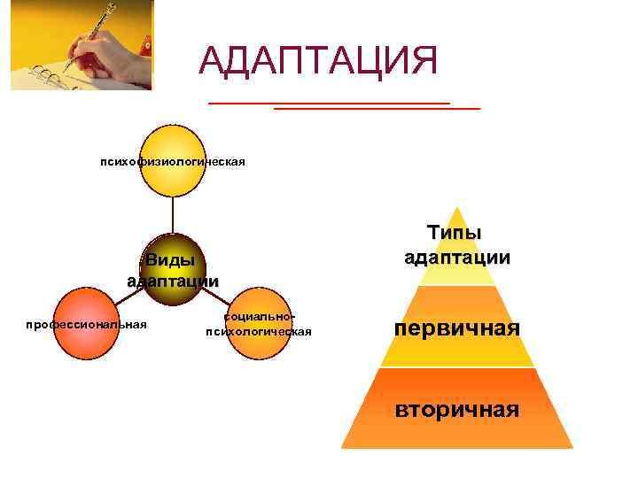 АДАПТАЦИЯ психофизиологическая Виды адаптации профессиональная социальнопсихологическая Типы адаптации первичная вторичная