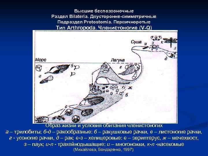 Высшие беспозвоночные Раздел Bilateria. Двусторонне-симметричные Подраздел Protostomia. Первичноротые Тип Arthropoda. Членистоногие (V-Q) Образ жизни