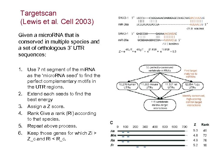 Targetscan (Lewis et al. Cell 2003) Given a micro. RNA that is conserved in