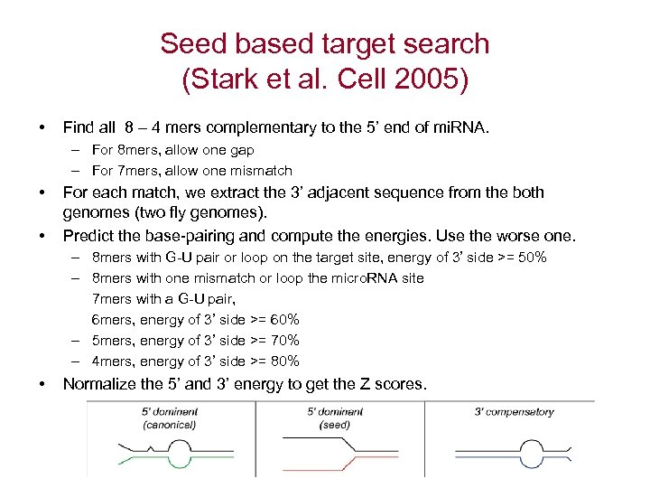 Seed based target search (Stark et al. Cell 2005) • Find all 8 –