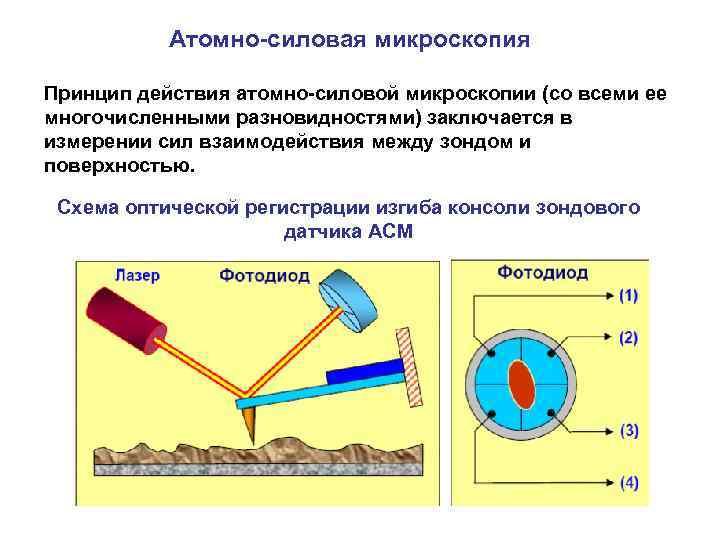 Атомно силовая микроскопия картинка