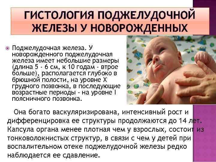 ГИСТОЛОГИЯ ПОДЖЕЛУДОЧНОЙ ЖЕЛЕЗЫ У НОВОРОЖДЕННЫХ Поджелудочная железа. У новорожденного поджелудочная железа имеет небольшие размеры