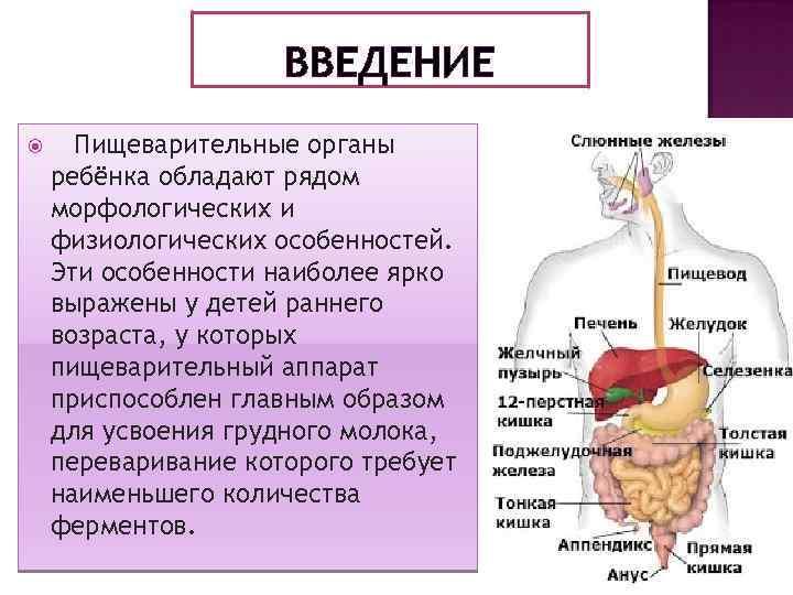 ВВЕДЕНИЕ Пищеварительные органы ребёнка обладают рядом морфологических и физиологических особенностей. Эти особенности наиболее ярко