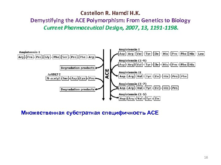 Castellon R. Hamdi H. K. Demystifying the ACE Polymorphism: From Genetics to Biology Current
