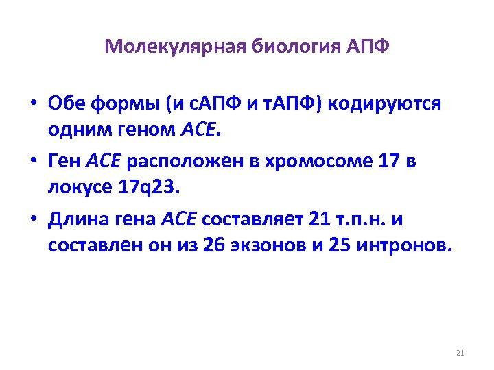 Молекулярная биология АПФ • Обе формы (и с. АПФ и т. АПФ) кодируются одним