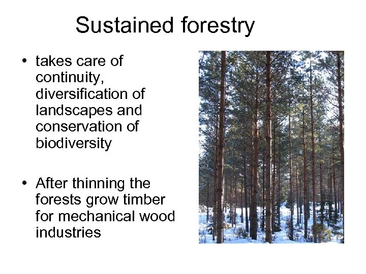 Sustained forestry • takes care of continuity, diversification of landscapes and conservation of biodiversity