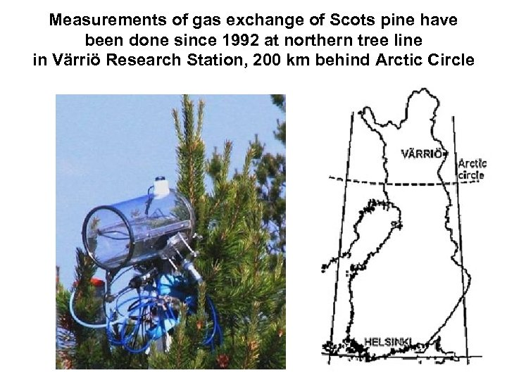 Measurements of gas exchange of Scots pine have been done since 1992 at northern