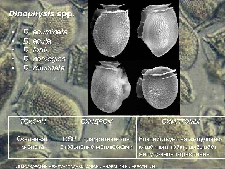 Dinophysis spp. • • • D. acuminata D. acuta D. fortii D. norvegica D.