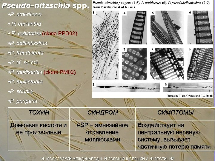 Pseudo-nitzschia spp. • P. americana • P. caciantha • P. calliantha (clone PPD 02)