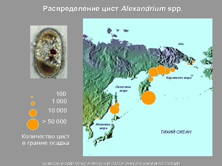 Распределение цист Alexandrium spp. Берингово море Охотское море 100 1 000 10 000 >