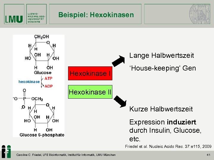 Beispiel: Hexokinasen Lange Halbwertszeit Hexokinase I 'House-keeping' Gen Hexokinase II Kurze Halbwertszeit Expression induziert
