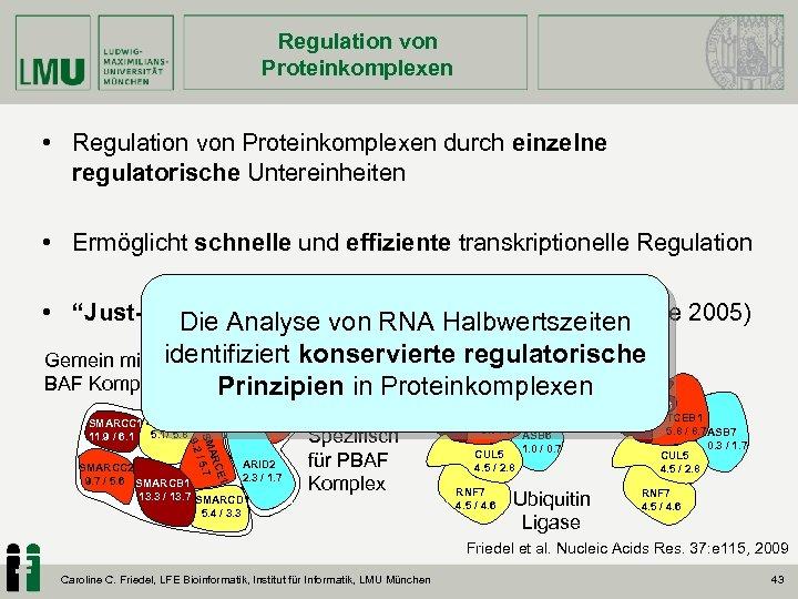 Regulation von Proteinkomplexen • Regulation von Proteinkomplexen durch einzelne regulatorische Untereinheiten • Ermöglicht schnelle
