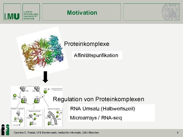 Motivation Proteinkomplexe Affinitätspurifikation Regulation von Proteinkomplexen RNA Umsatz (Halbwertszeit) Microarrays / RNA-seq Caroline C.