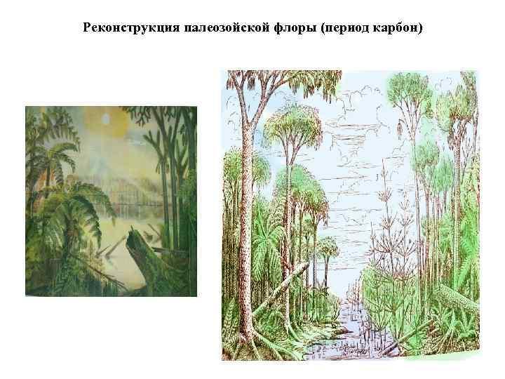 Реконструкция палеозойской флоры (период карбон)