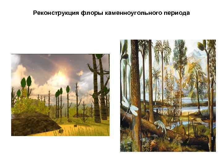 Реконструкция флоры каменноугольного периода