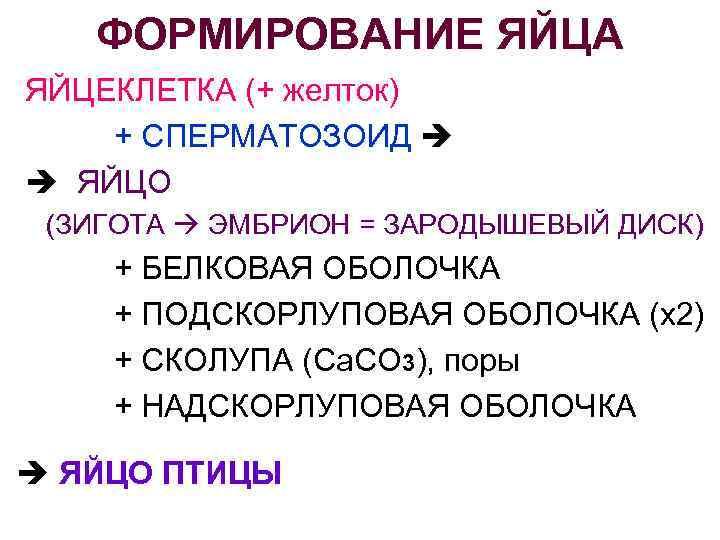 ФОРМИРОВАНИЕ ЯЙЦА ЯЙЦЕКЛЕТКА (+ желток) + СПЕРМАТОЗОИД ЯЙЦО (ЗИГОТА ЭМБРИОН = ЗАРОДЫШЕВЫЙ ДИСК) +