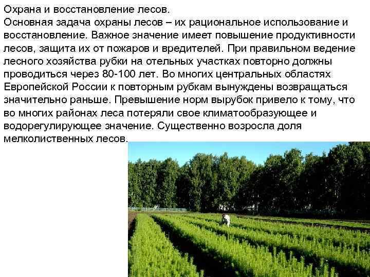 Охрана и восстановление лесов. Основная задача охраны лесов – их рациональное использование и восстановление.