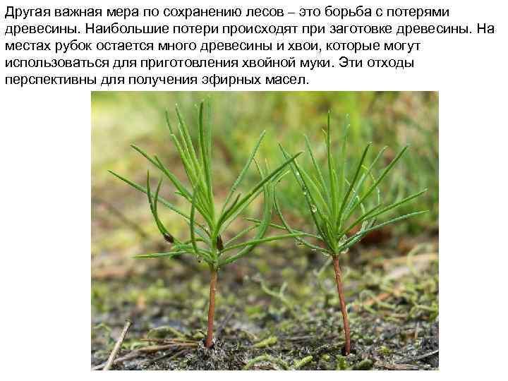 Другая важная мера по сохранению лесов – это борьба с потерями древесины. Наибольшие потери