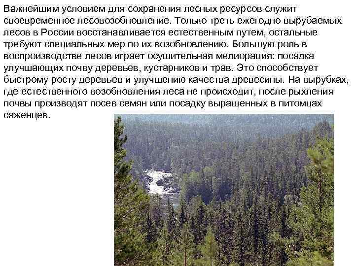 Важнейшим условием для сохранения лесных ресурсов служит своевременное лесовозобновление. Только треть ежегодно вырубаемых лесов