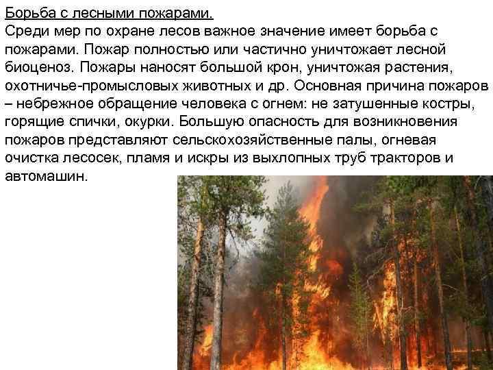 Борьба с лесными пожарами. Среди мер по охране лесов важное значение имеет борьба с