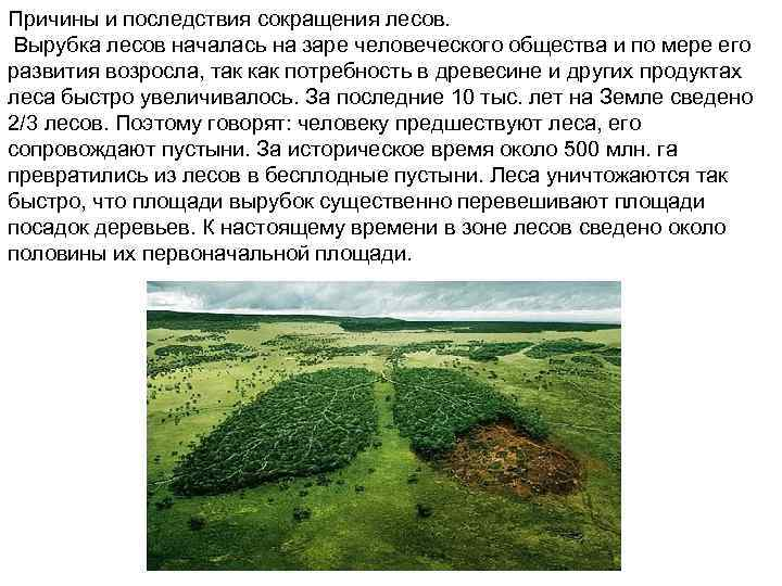 Причины и последствия сокращения лесов. Вырубка лесов началась на заре человеческого общества и по