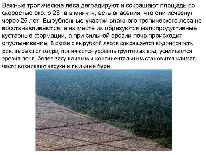 Важные тропические леса деградируют и сокращают площадь со скоростью около 26 га в минуту,