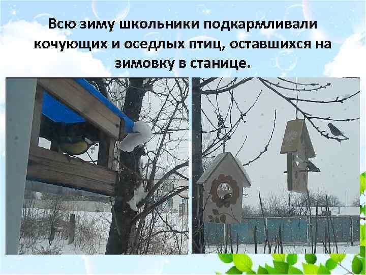 Всю зиму школьники подкармливали кочующих и оседлых птиц, оставшихся на зимовку в станице.