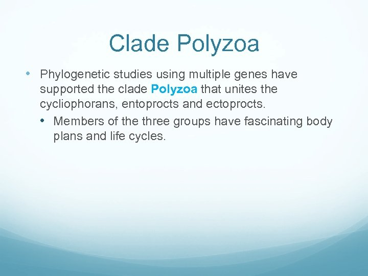 Clade Polyzoa • Phylogenetic studies using multiple genes have supported the clade Polyzoa that