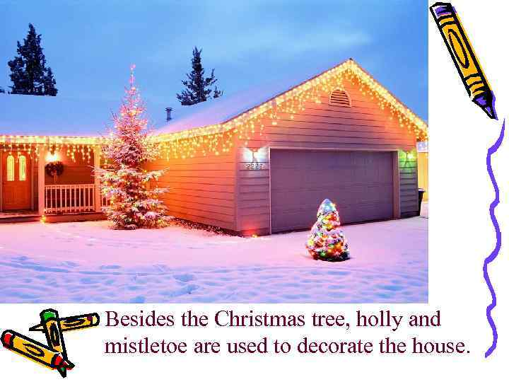 • Besides the Christmas tree, holly and mistletoe are used to decorate the