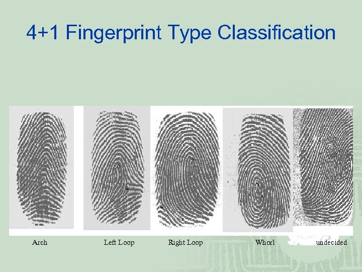 4+1 Fingerprint Type Classification Arch Left Loop Right Loop Whorl undecided