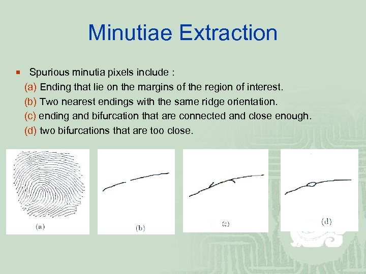 Minutiae Extraction ¡ Spurious minutia pixels include : (a) Ending that lie on the