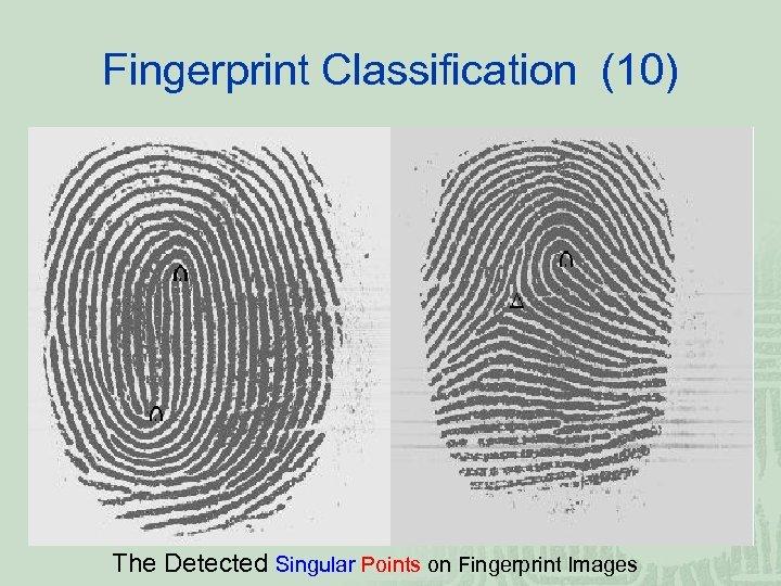 Fingerprint Classification (10) The Detected Singular Points on Fingerprint Images