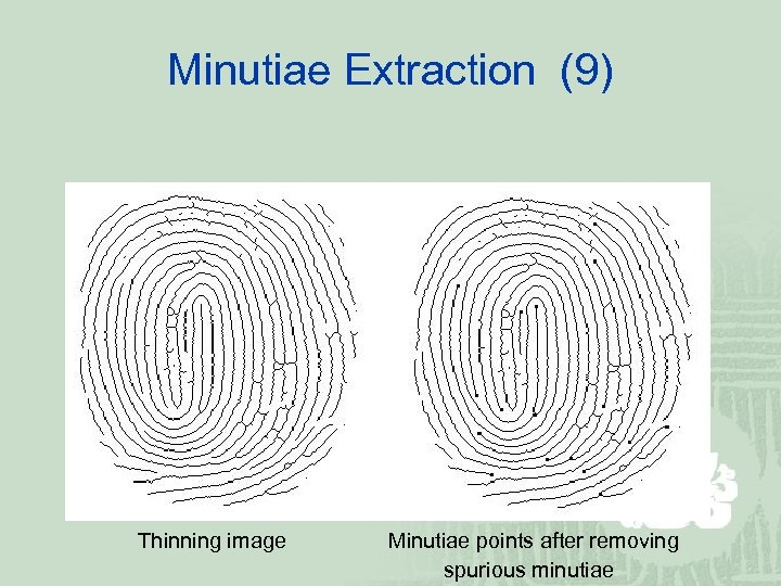 Minutiae Extraction (9) Thinning image Minutiae points after removing spurious minutiae