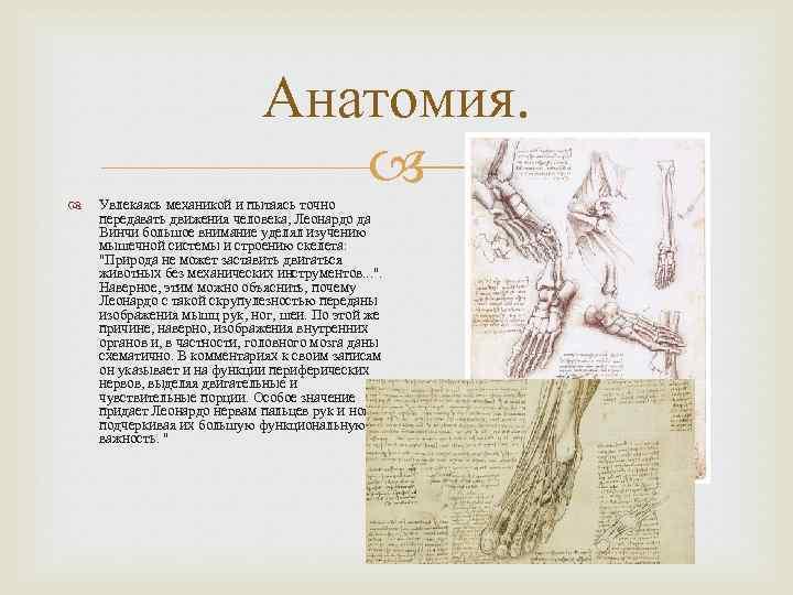 Анатомия. Увлекаясь механикой и пытаясь точно передавать движения человека, Леонардо да Винчи большое внимание