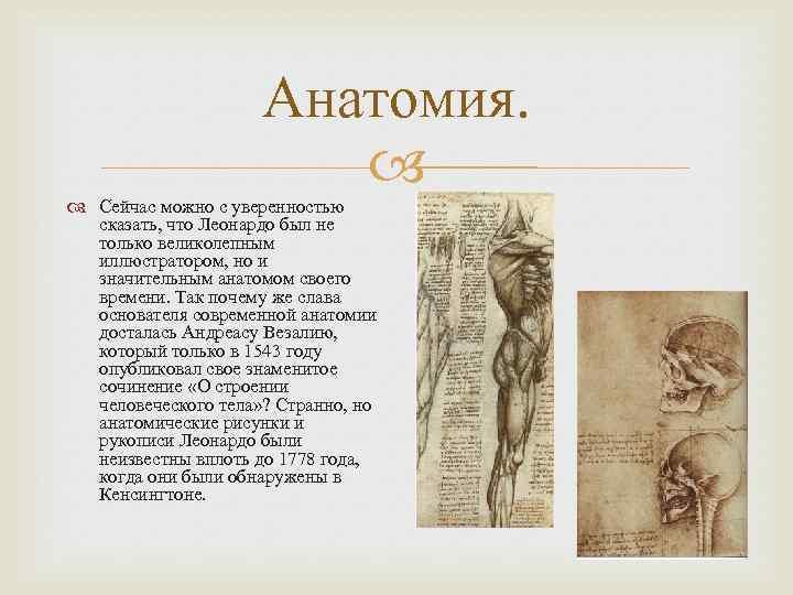 Анатомия. Сейчас можно с уверенностью сказать, что Леонардо был не только великолепным иллюстратором, но