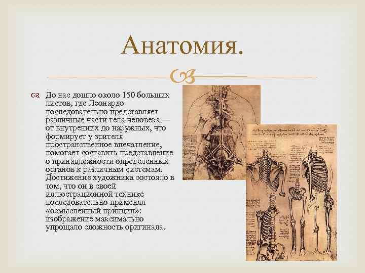 Анатомия. До нас дошло около 150 больших листов, где Леонардо последовательно представляет различные части