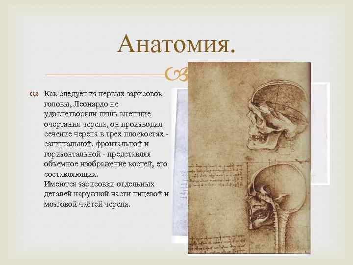 Анатомия. Как следует из первых зарисовок головы, Леонардо не удовлетворяли лишь внешние очертания черепа,