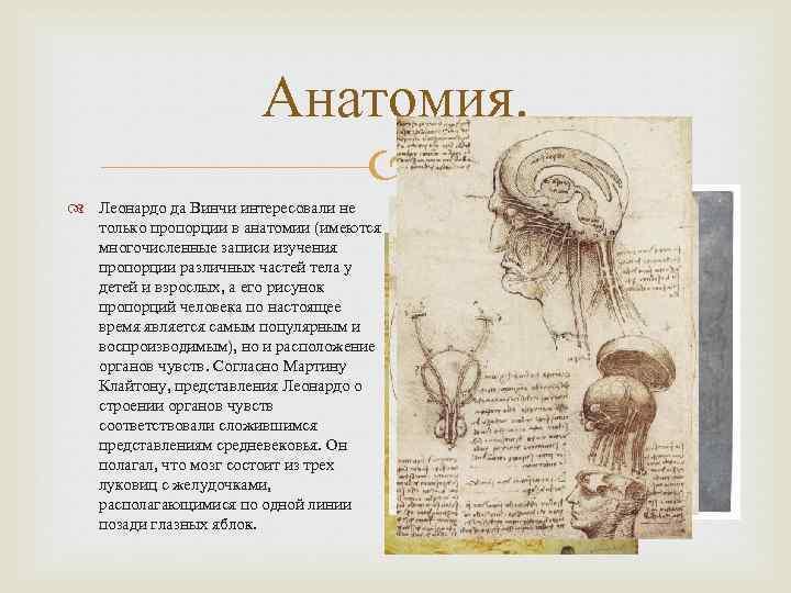 Анатомия. Леонардо да Винчи интересовали не только пропорции в анатомии (имеются многочисленные записи изучения