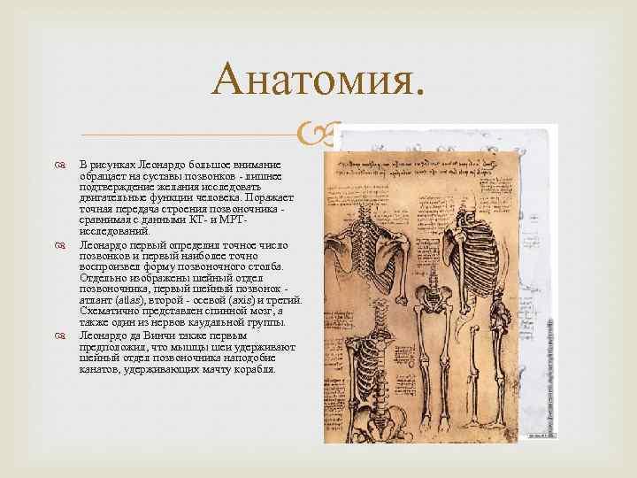 Анатомия. В рисунках Леонардо большое внимание обращает на суставы позвонков - лишнее подтверждение желания