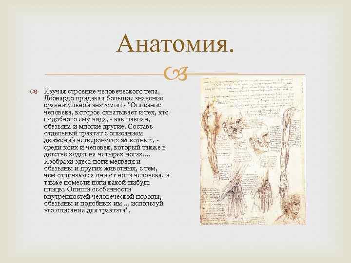 Анатомия. Изучая строение человеческого тела, Леонардо придавал большое значение сравнительной анатомии -