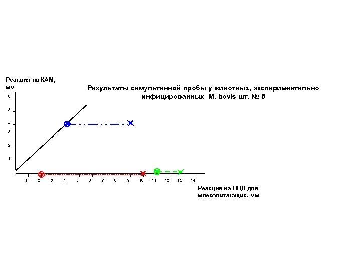 Реакция на КАМ, мм Результаты симультанной пробы у животных, экспериментально инфицированных M. bovis шт.