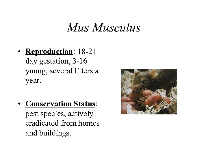 Mus Musculus • Reproduction: 18 -21 day gestation, 3 -16 young, several litters a