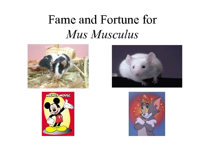 Fame and Fortune for Musculus